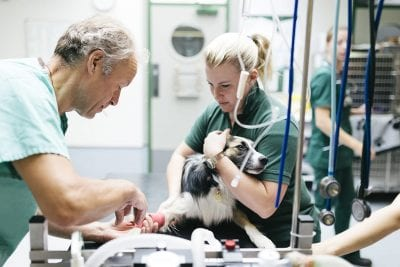 Dog receiving anaesthetic from veterinarians
