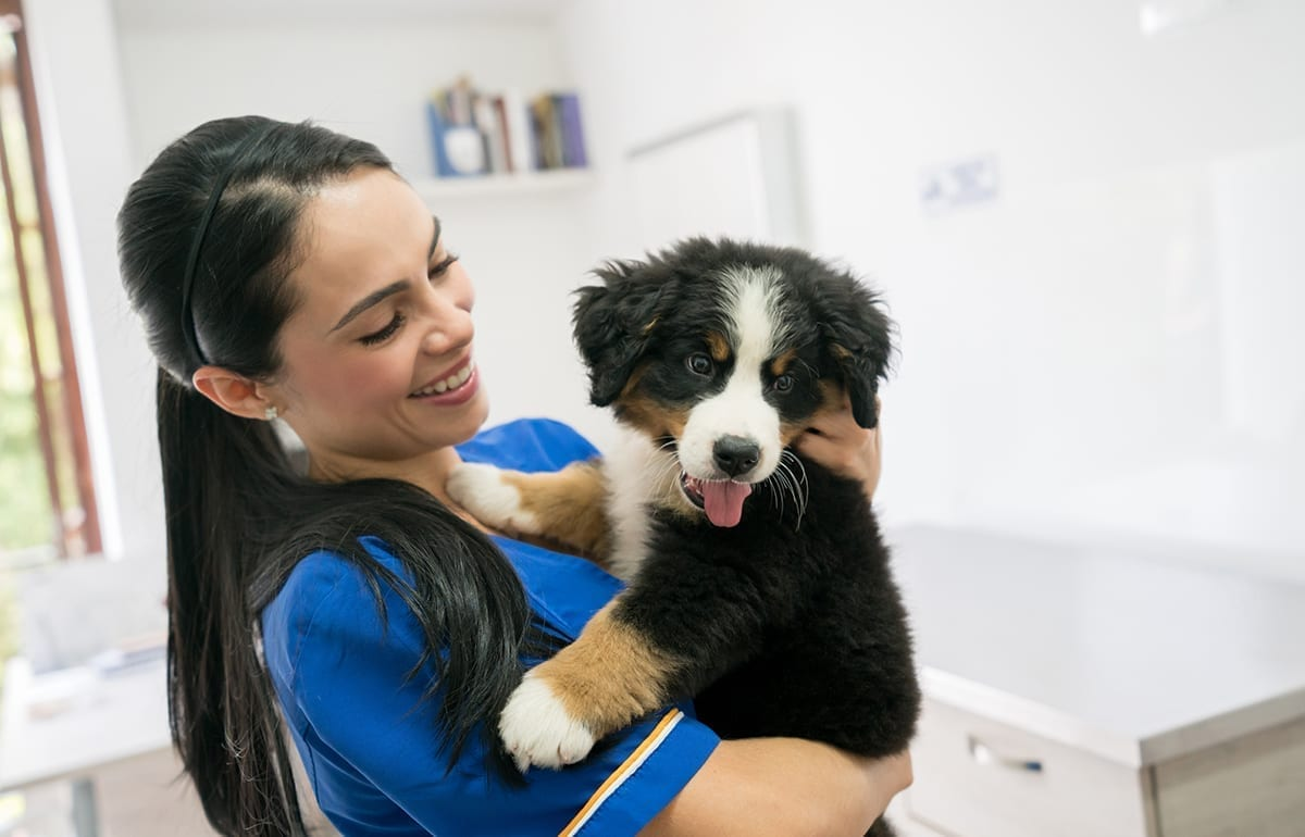 Happy veterinarian holding a beautiful puppy
