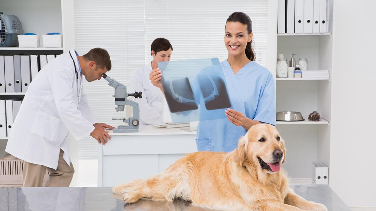 Steps to build an engaged veterinary team